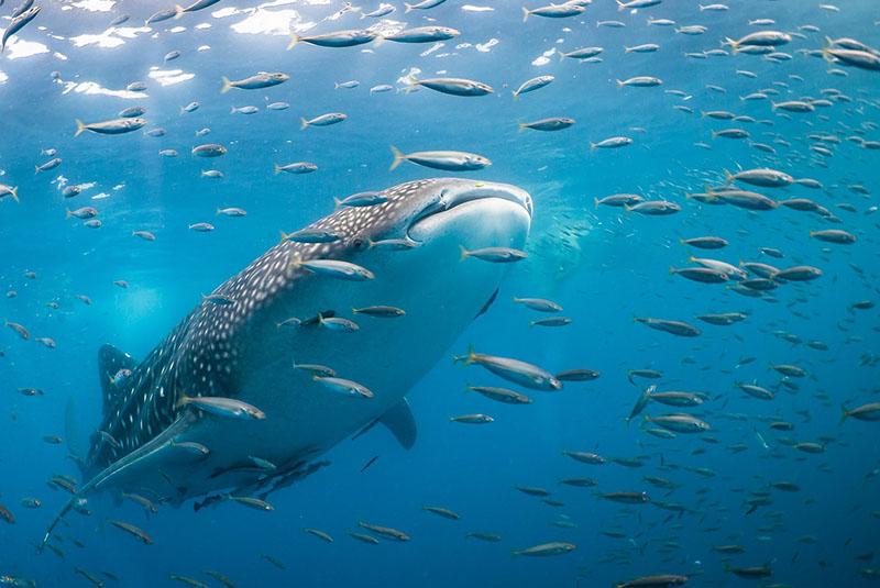 Persian Gulf Wildlife