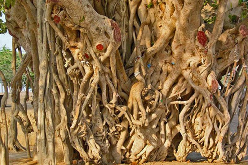 Lur tree kish