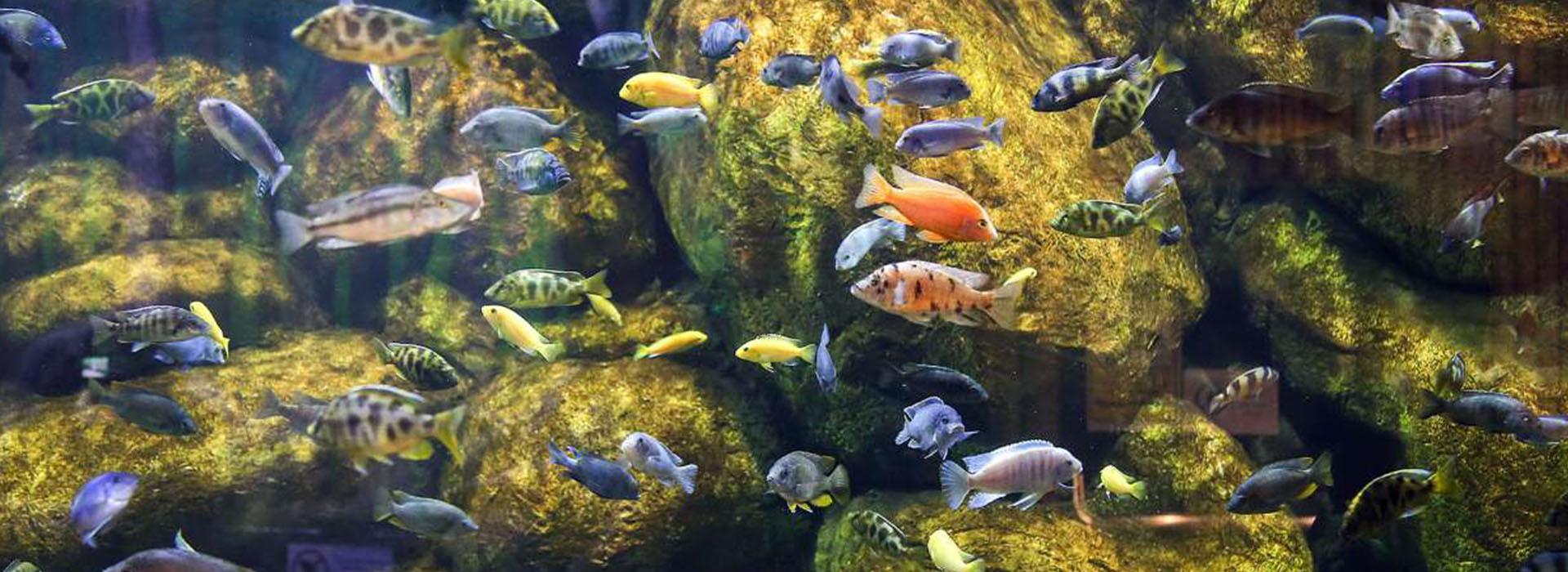 The Largest Aquarium Tunnel in Iran Opens in Bandar-e Anzali